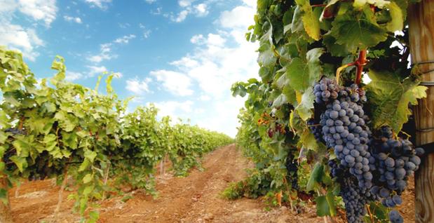 самое дорогое вино в мире цена